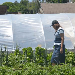 volunteer-farm